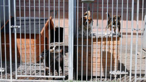 Służby pomagają bezdomnym zwierzętom