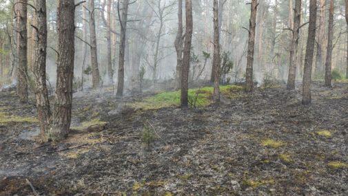Leoncin: Paliła się Puszcza Kampinoska