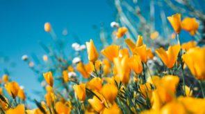 Wiosenne barwy w stylizacjach – jak je dobierać?